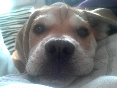 Puggle – Leben mit Hund Blog Foto1