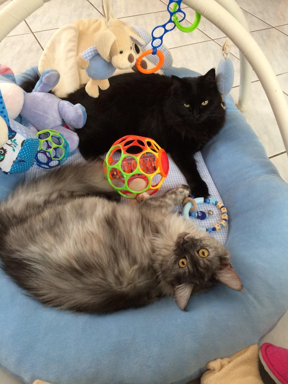 Freebooktratsch Bekis-scrapcats mit dem Mäppchen2