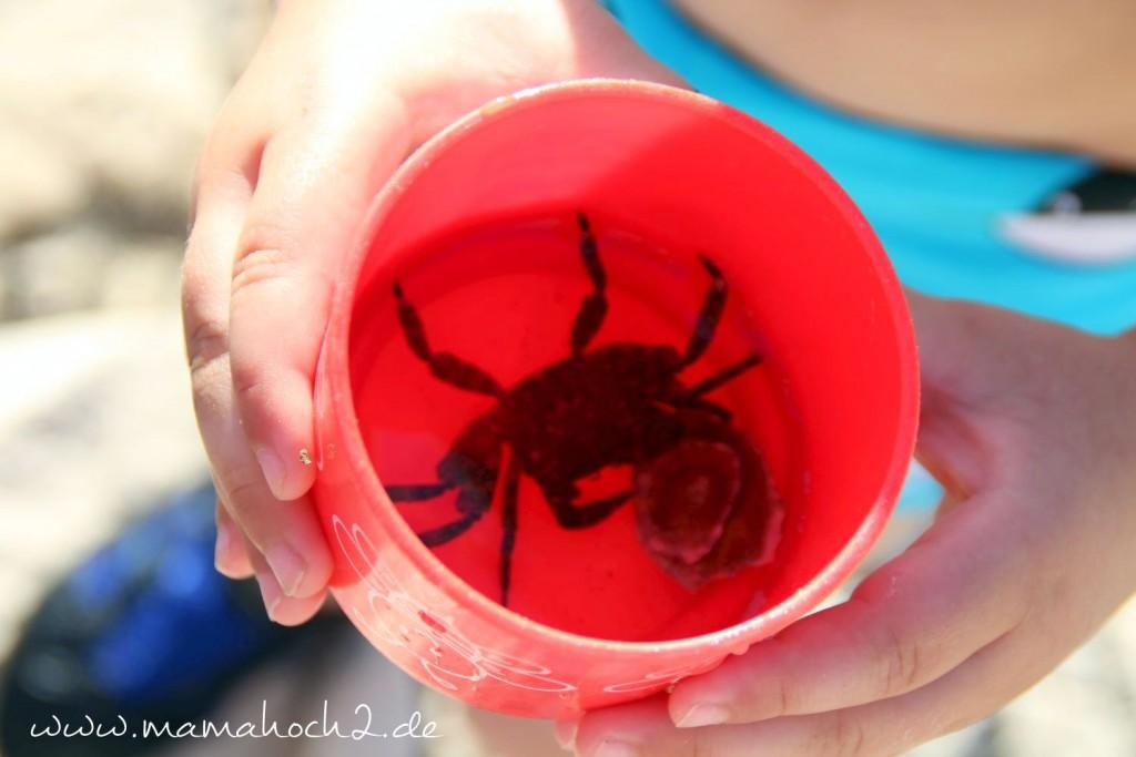 krabbe urlaub kroatien