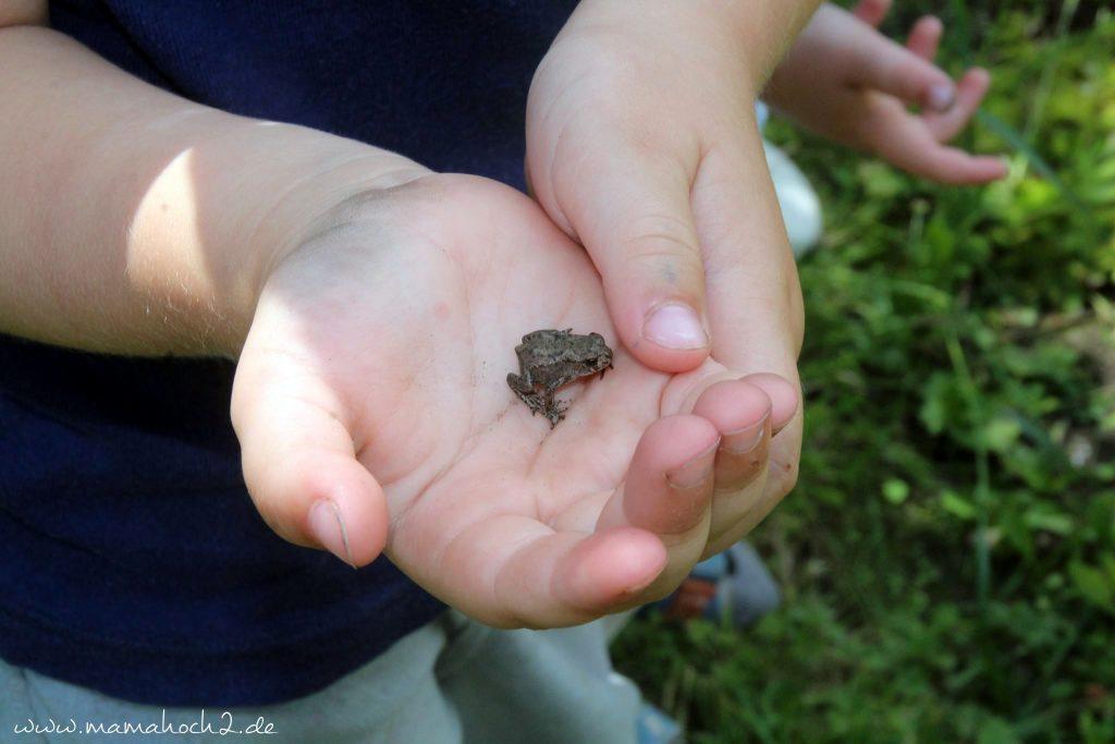 froschbaby im garten (2)