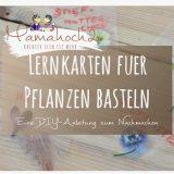 montessori-inspirierte Lernkarten für Frühblüher basteln: Welche Pflanzen wachsen (wann)bei uns?