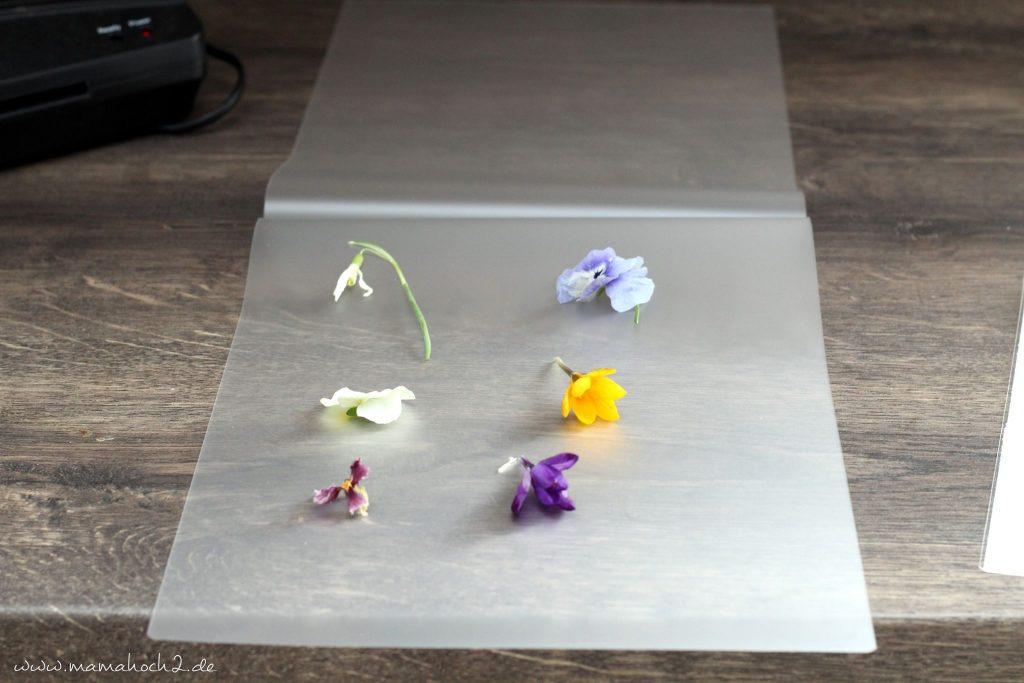 lernkarten pflanzen montessori lernen pflanzen frühblüher 1 (1)