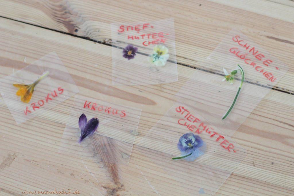 lernkarten pflanzen montessori lernen pflanzen frühblüher 1 (2)