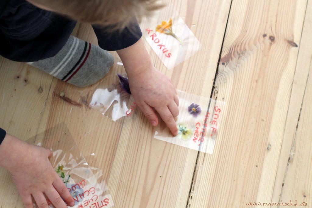 lernkarten pflanzen montessori lernen pflanzen frühblüher 1 (3)