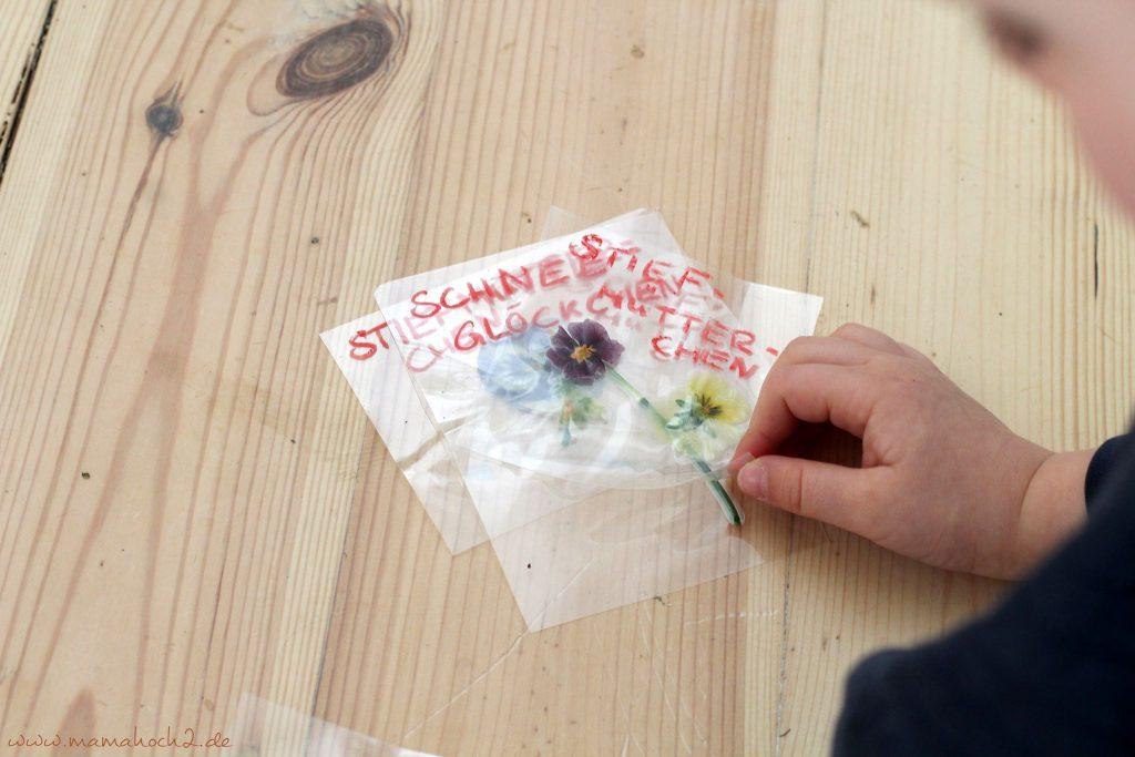 lernkarten pflanzen montessori lernen pflanzen frühblüher 1 (5)