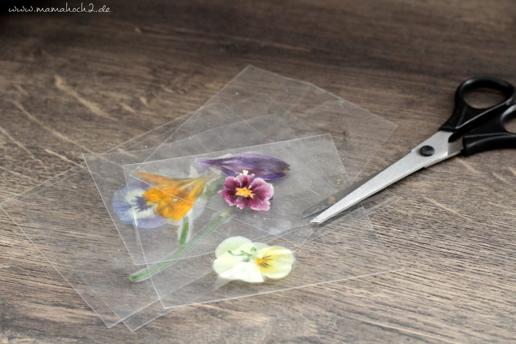lernkarten pflanzen montessori lernen pflanzen frühblüher 1 (7)