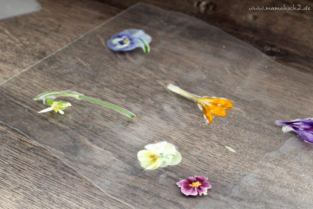 lernkarten pflanzen montessori lernen pflanzen frühblüher 1 (8)