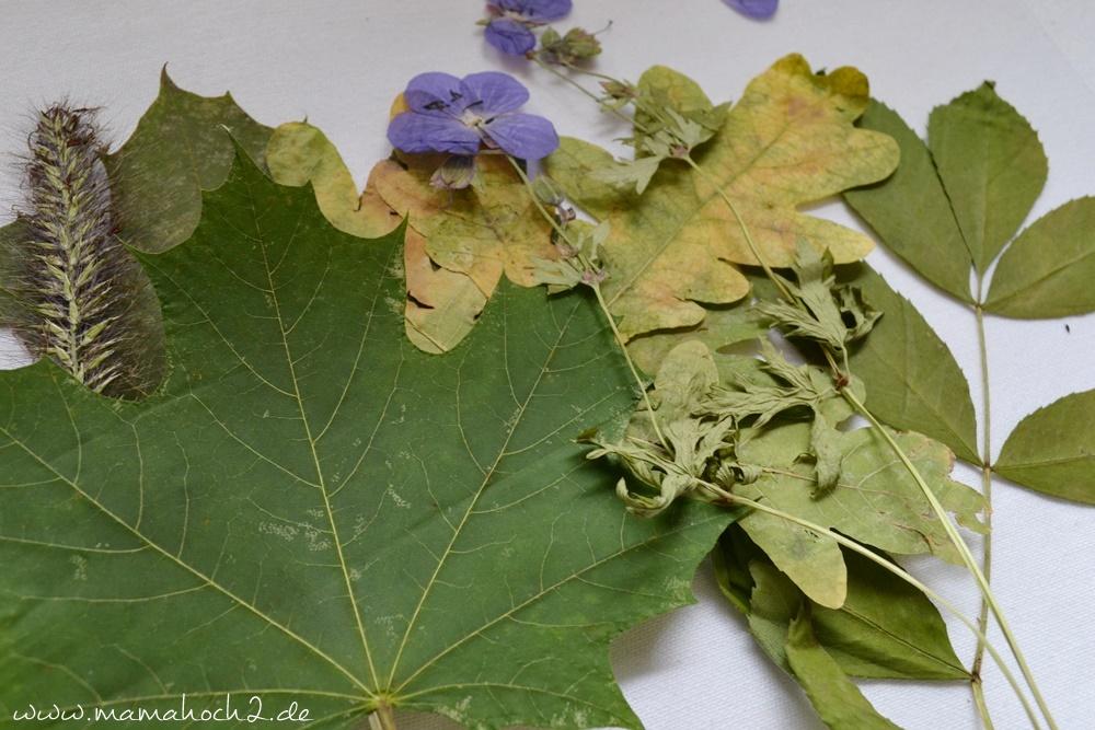 Transparentes Herbstbild – getrocknete blätter als Deko – Herbstdekoration (20)