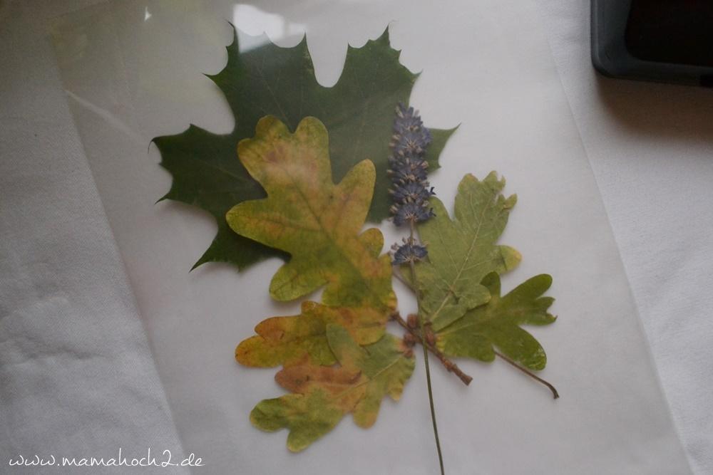 Transparentes Herbstbild – getrocknete blätter als Deko – Herbstdekoration (22)