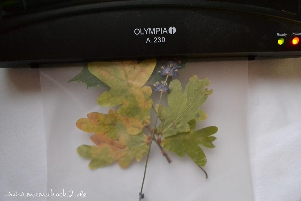 Transparentes Herbstbild – getrocknete blätter als Deko – Herbstdekoration (23)