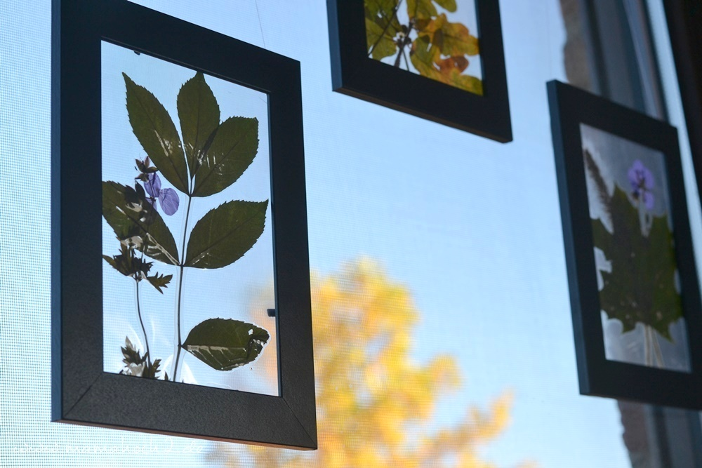 Transparentes Herbstbild – getrocknete blätter als Deko – Herbstdekoration 27