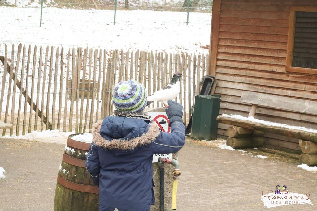 center parcs erfahrungsbericht bostalsee familienurlaub (41)