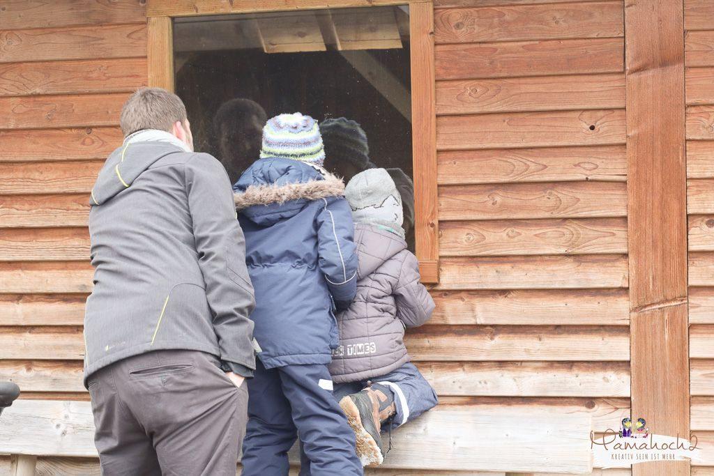 center parcs erfahrungsbericht bostalsee familienurlaub (54)